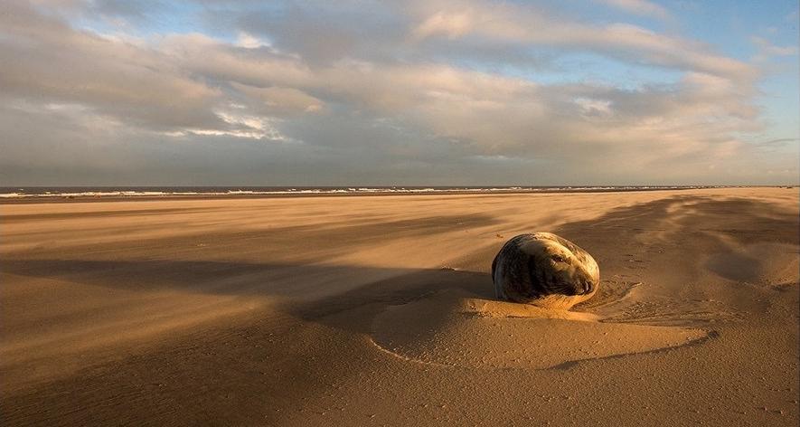 """""""DONNA NOOK"""" la spiaggia delle foche"""